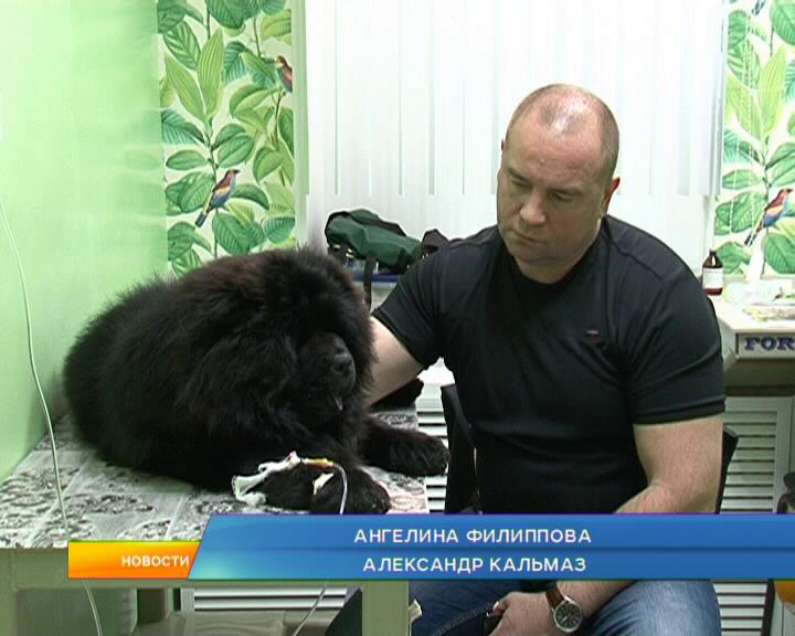 Медики отмечают раннюю активность клещей в Курской области