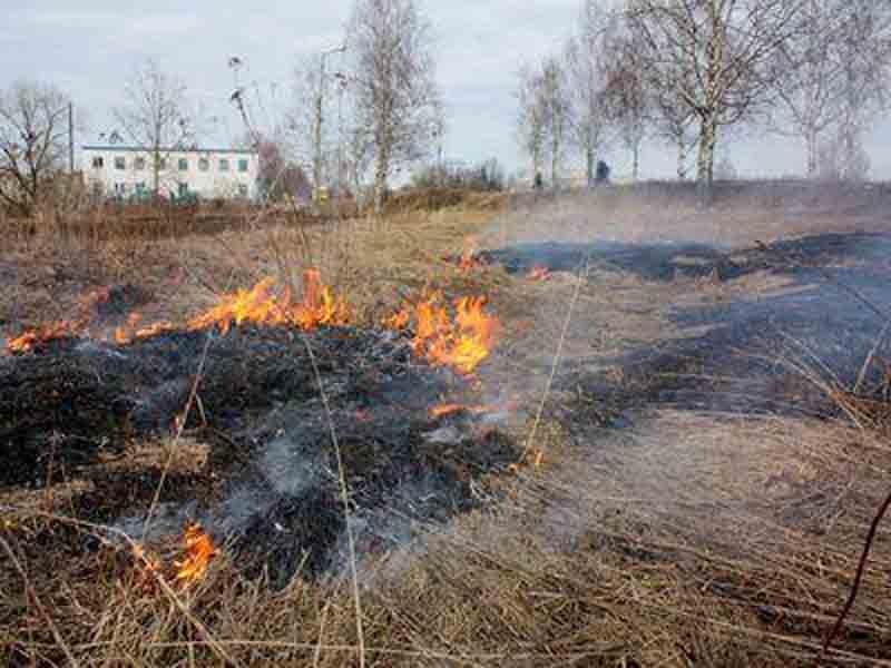 80-летняя курянка погибла, сжигая траву на участке
