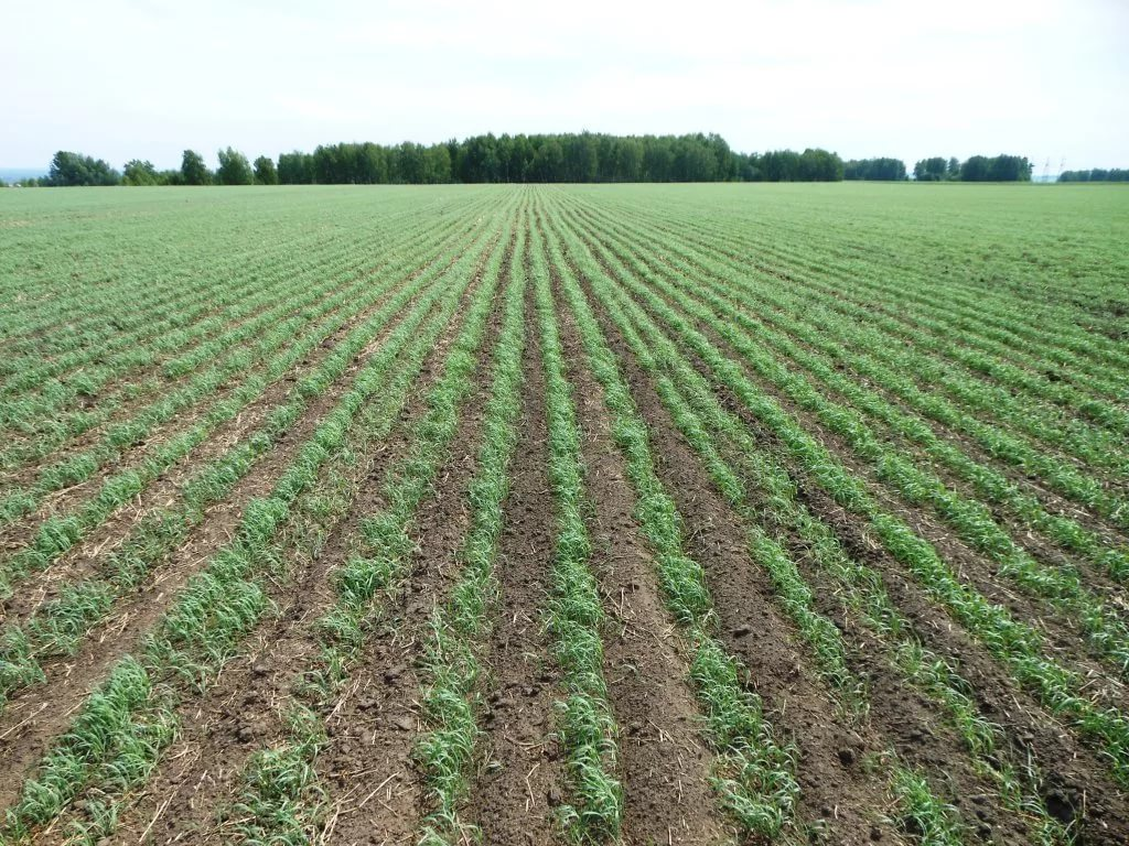 В Курской области завершается сев яровых зерновых
