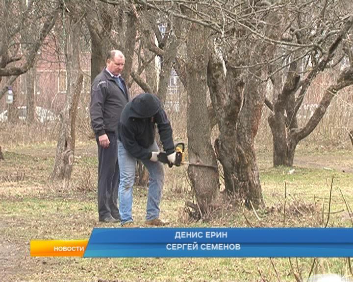 Куряне устроили субботник в яблоневом саду
