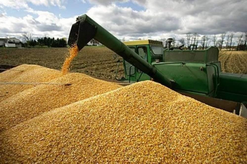 Две тысячи тонн курского зерна запретили к экспорту
