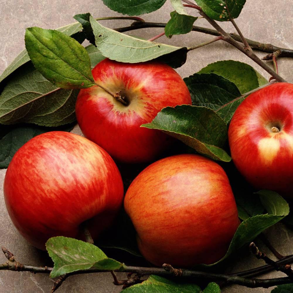 В Курск не пустили молдавские яблоки