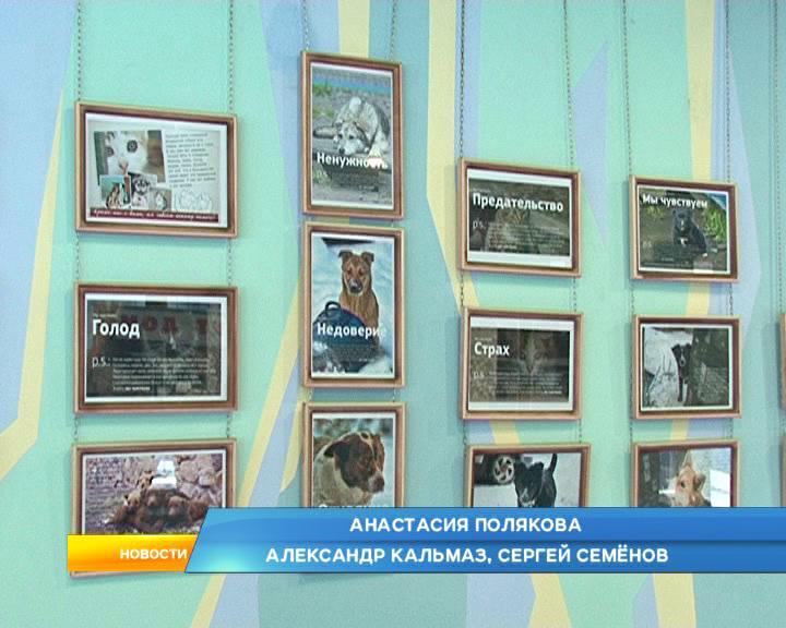 В Курске открылась фотовыставка бездомных животных