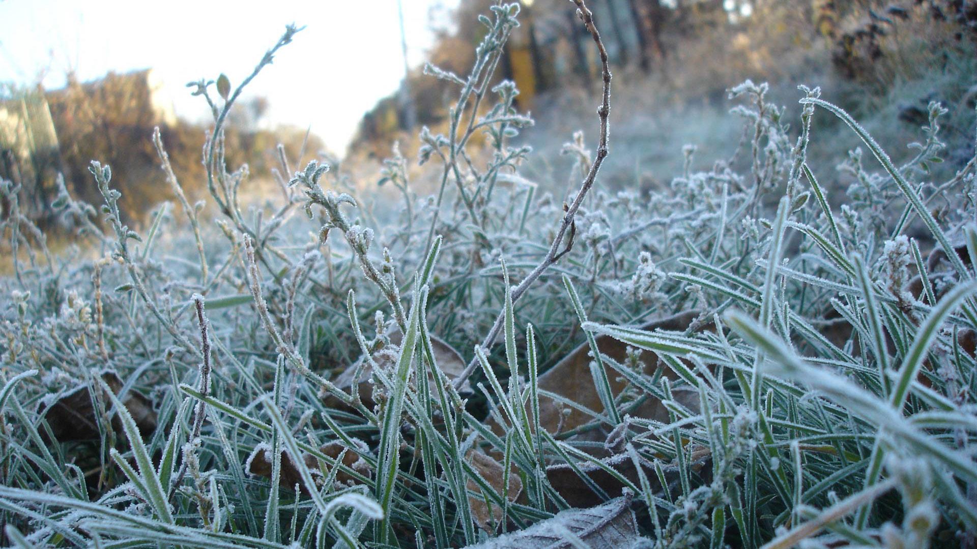 Сегодня ночью в Курске будет мороз