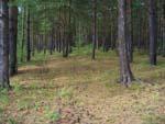 Под Курском пытались продать собственность лесного фонда России