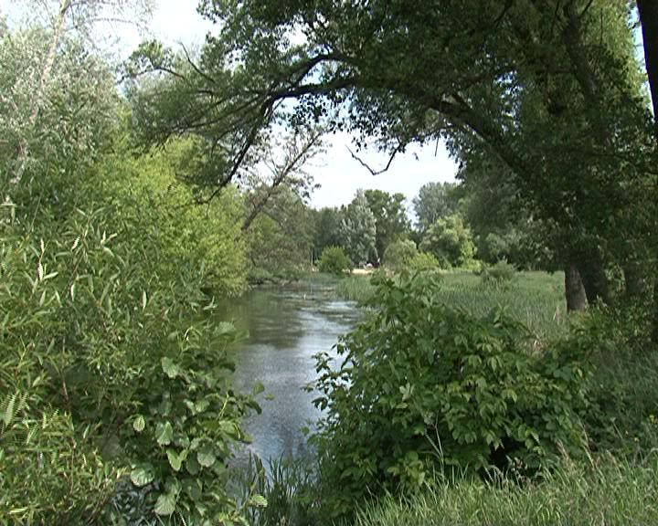 Курские реки зарастают мусором