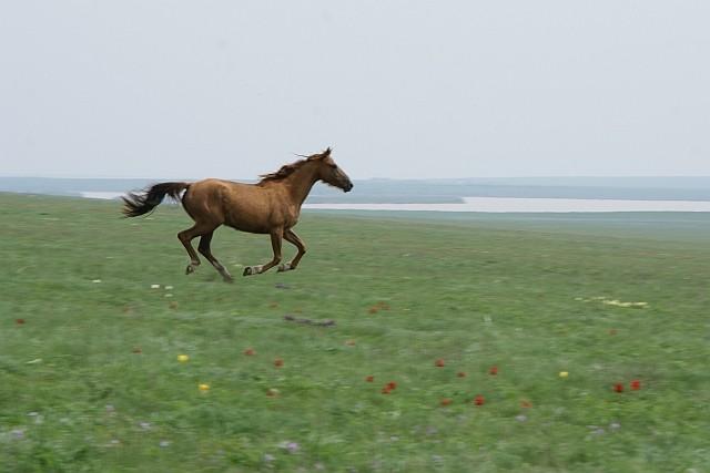 В Стрелецкой степи будут пастись лошади курской полиции