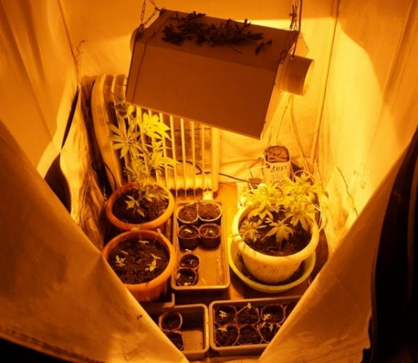 В Железногорске мужчина выращивал коноплю в гараже