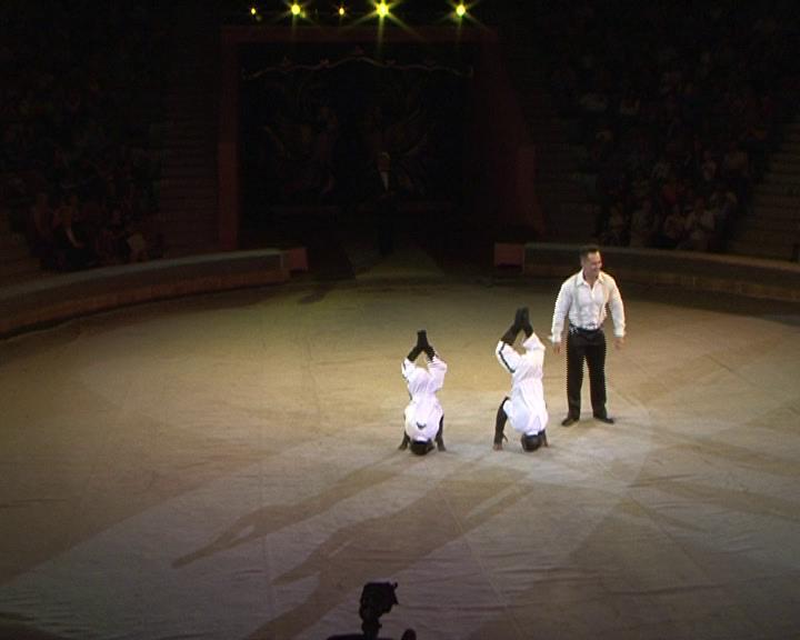 Легендарная цирковая династия Запашных дала праздничное представление для курских зрителей