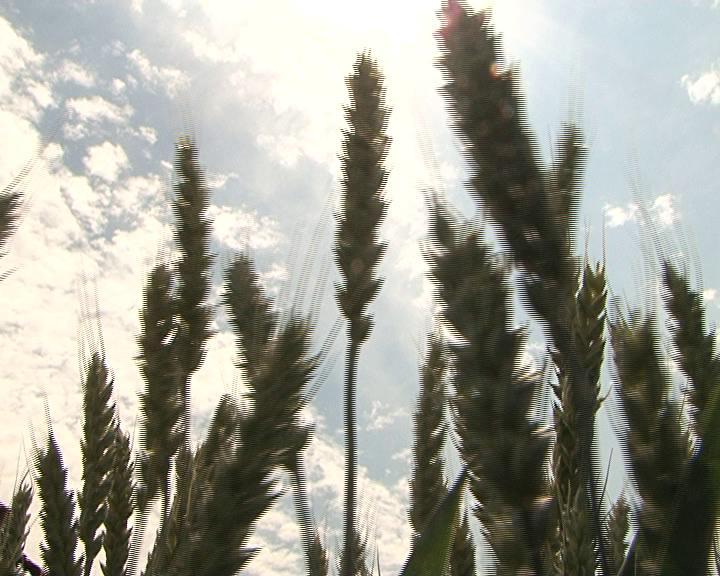 Руководителей фермерских хозяйств знакомили с последними разработками курских селекционеров