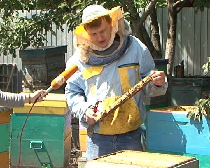Курские пчеловоды подсчитывают убытки