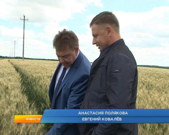 Курские аграрии готовятся к сбору первого урожая