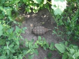 В селе Курской области обнаружили гранату
