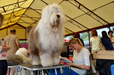 В Курской области выберут лучшую породу собак