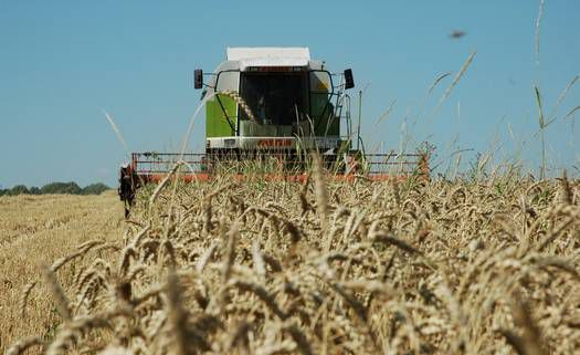 Курские аграрии собрали первый миллион тонн зерна