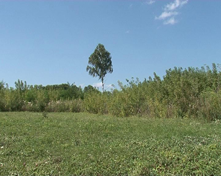 В Курской области селяне пытаются сохранить старый парк