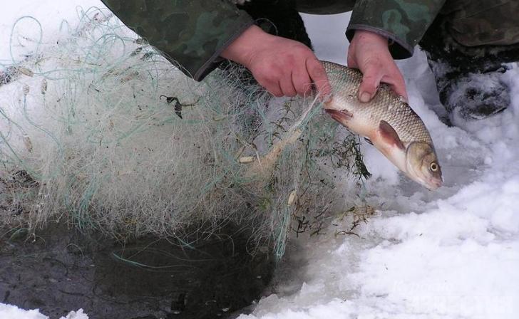 В Курской области рыбак попал под суд за незаконный улов