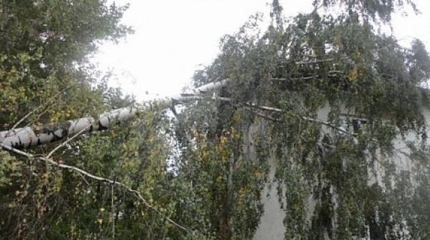 В Курске от ветра падают деревья
