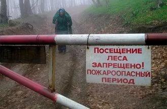 В Курской области ограничили посещение лесов
