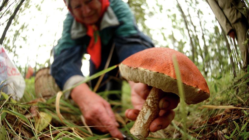 Курским полицейским удалось найти заблудившуюся в лесу женщину