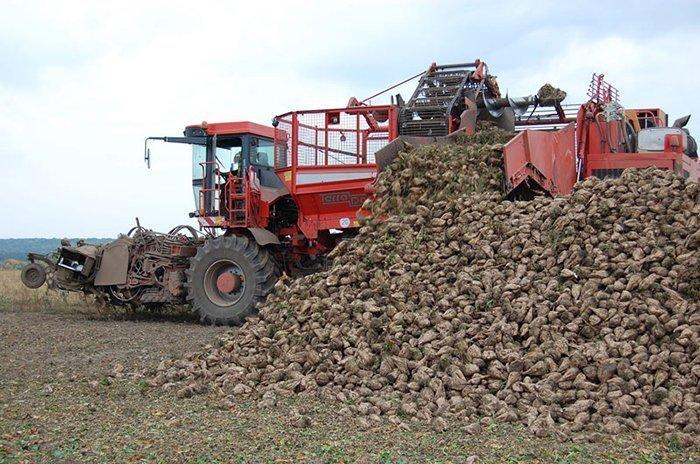 2 млн тонн сахарной свеклы уже собрано в Курской области
