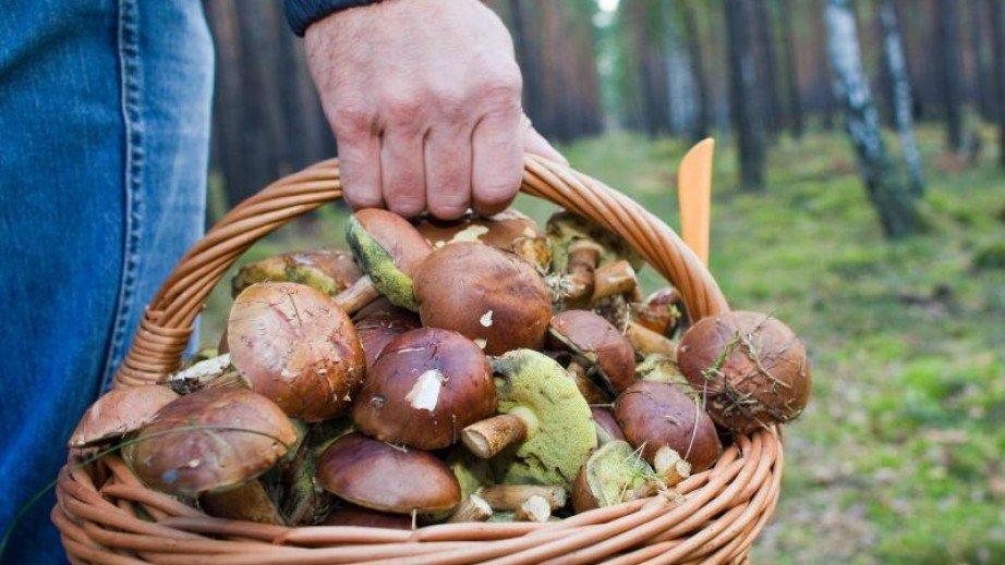 В Курской области больше 30 человек отравились грибами