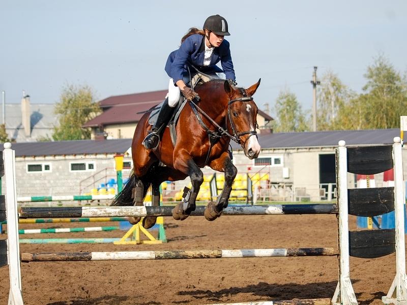 Курск примет чемпионат и первенство по конному спорту